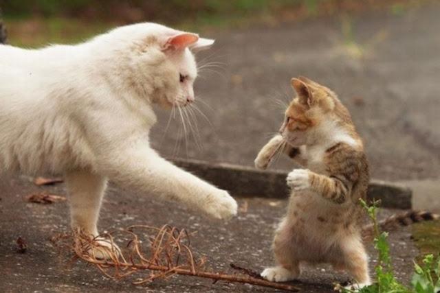 Mengapa Kucing Marah Saat Dipegang Perutnya Ini Alasannya Groufiee