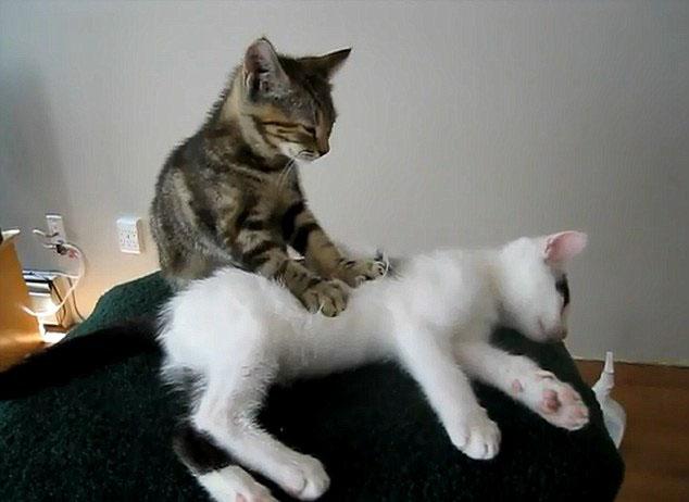 Gerakan kucing suka memijat