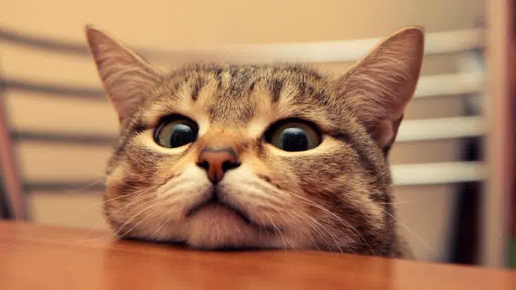 Kucing Melamun